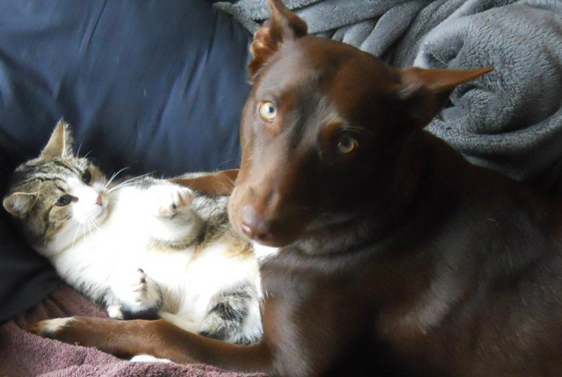 Ebony and winnie