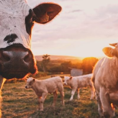 The Sustainability of Bone Broth