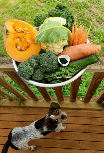 Doggie Broth Ingredients